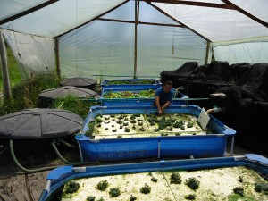 small scale aquaponics colombia